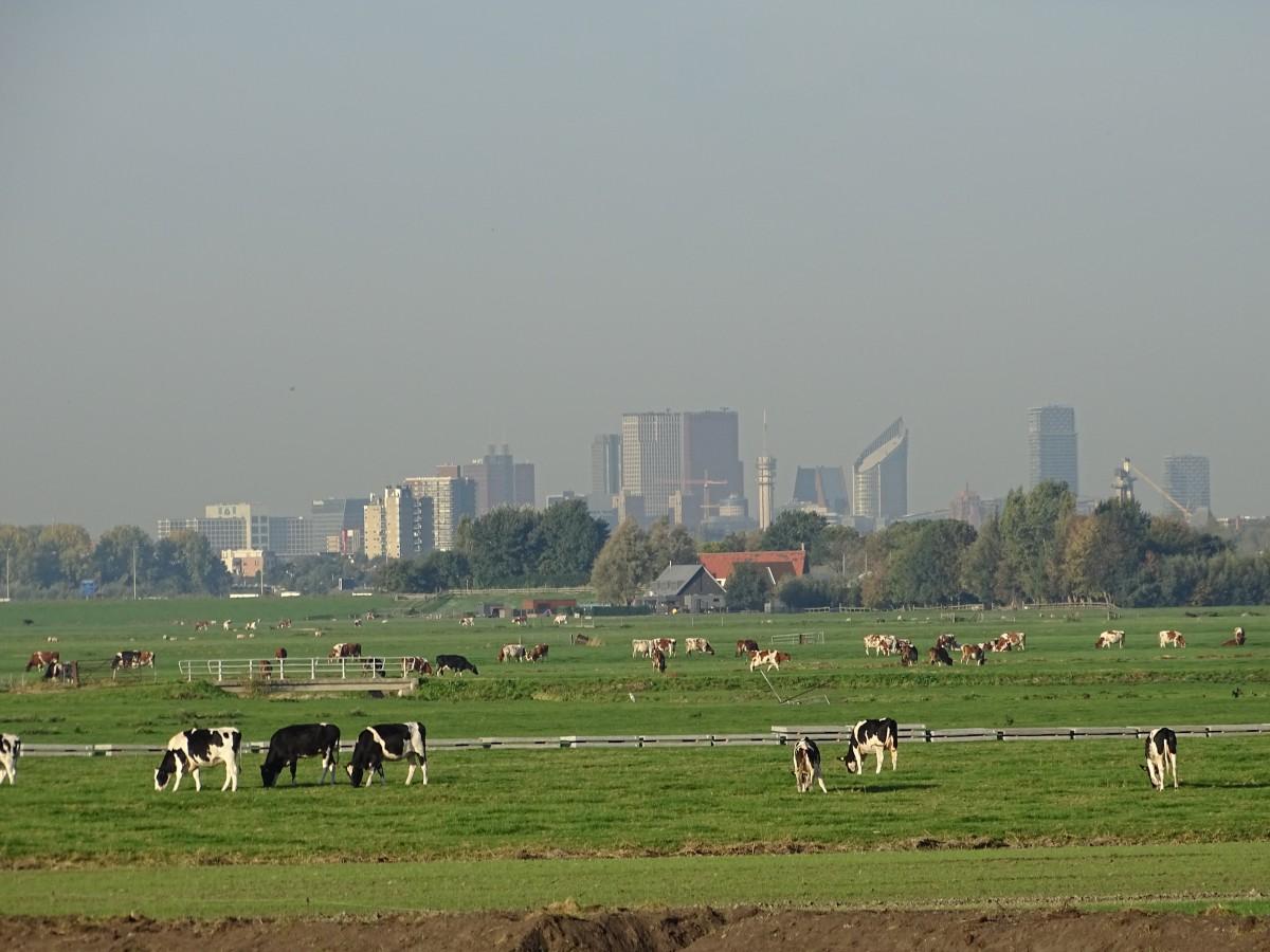 Boeren tussen Steden